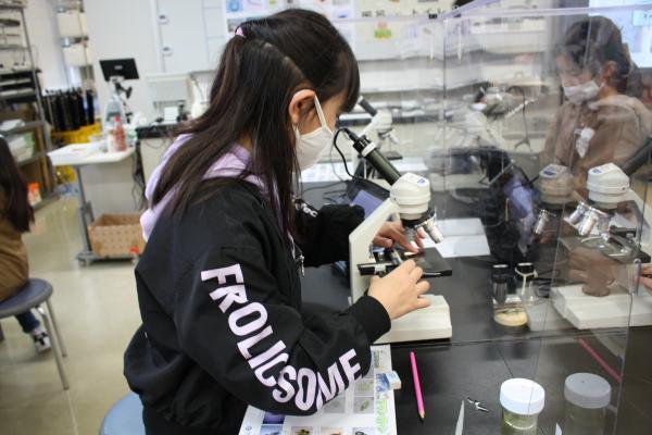 顕微鏡の使い方を覚え、プランクトンを観察しました。