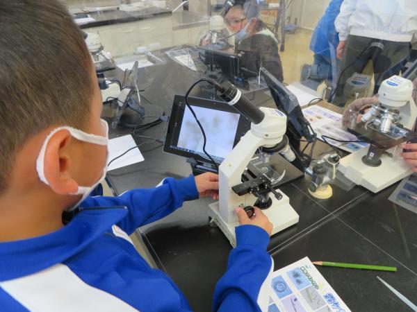 微生物の観察