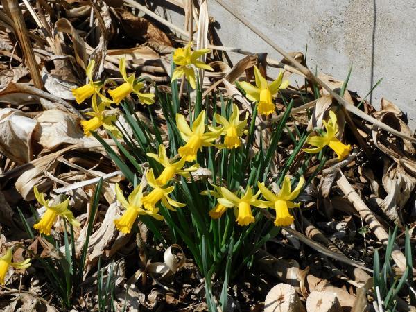 少しずつ春が・・・